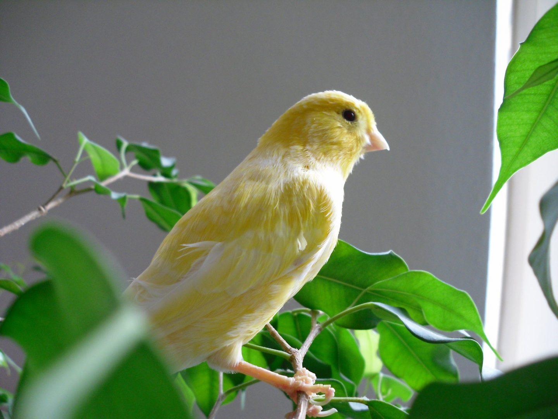 La Lista de nombres vulgares y botánicos de árboles y
